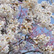 Photo trip しろいし いろいろ ×【東町_東町第二公園】 2017.4.14